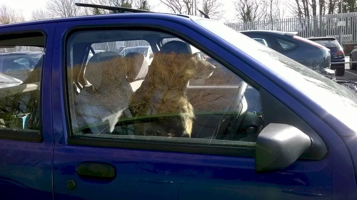 Viajar con tu perro en el auto