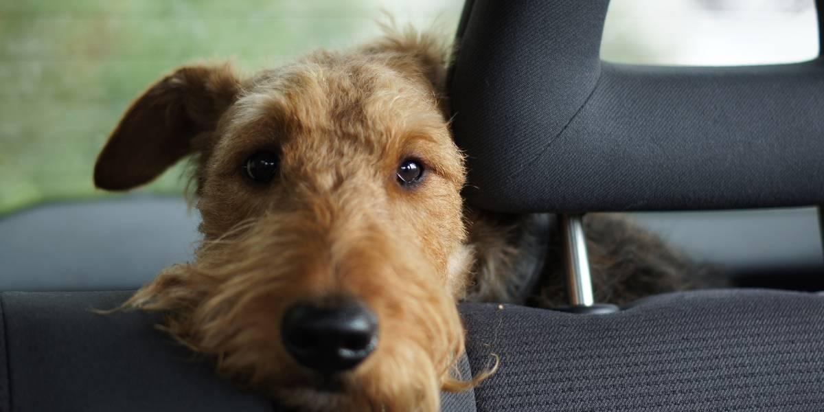 Cómo eliminar el olor a perro del interior de tu auto
