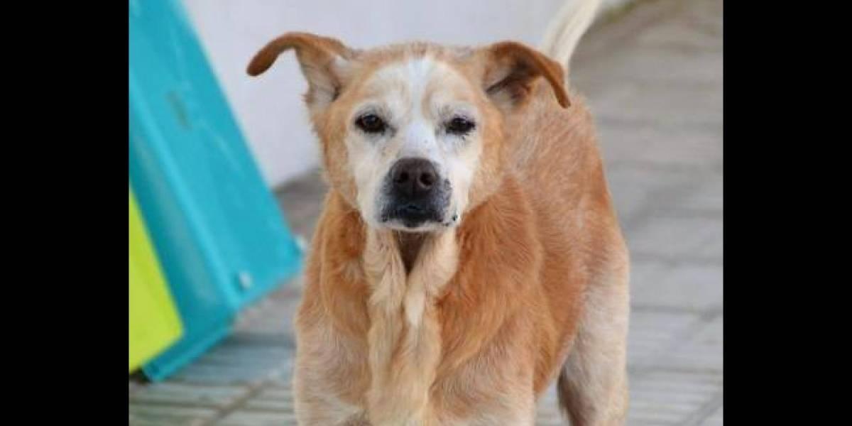 """""""Se fue delante de ella para guiarla"""": anciana no podía cuidar a su perro por una enfermedad, se separaron y murieron sólo con unas horas de diferencia"""