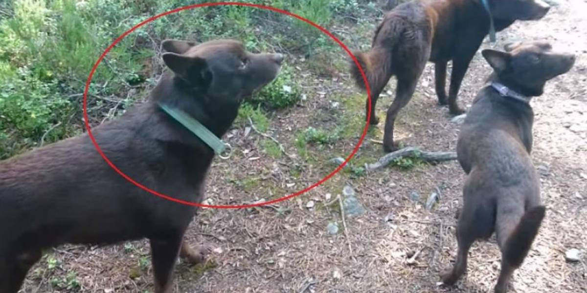 Vídeo de 'cachorros estátuas' que se tornou viral nas redes sociais é real