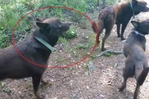 https://www.metrojornal.com.br/social/2019/08/14/video-de-cachorros-estatuas-que-se-tornou-viral-nas-redes-sociais-e-real.html