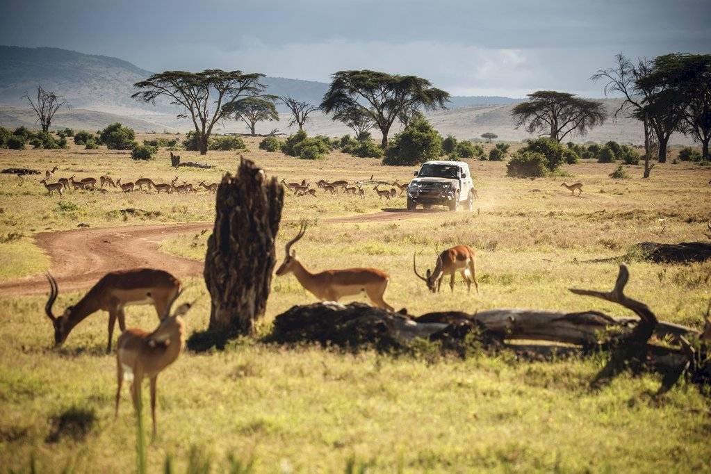 Land Rover Defender 2020 - Borana Kenya - Leones- 2019-