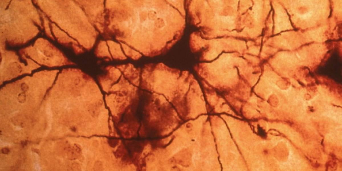 Descubren nuevo órgano sensorial en el cuerpo humano: dónde está y por qué es tan importante