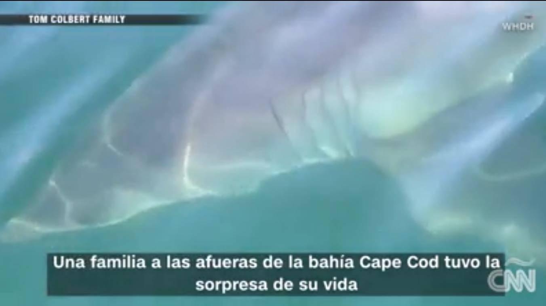 Increíble: Familia tuvo un espeluznante encuentro con un tiburón al estilo de una película