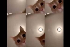 'Mr. Sandman': como o vídeo de 13 segundos de um gato se transformou em um sucesso viral