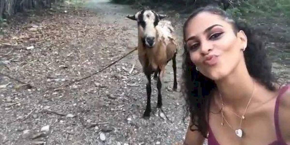 Ela só queria tirar uma selfie com a cabra, mas o resultado não foi o esperado; confira o vídeo