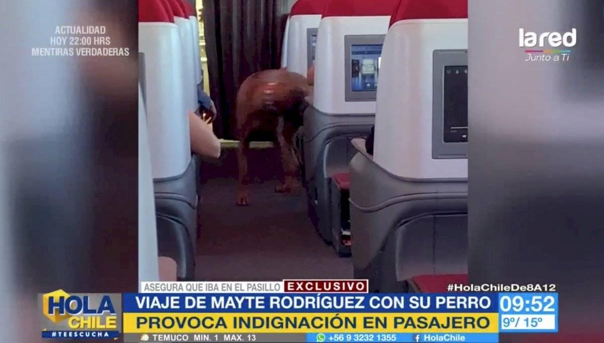 Perro Mayte en avión