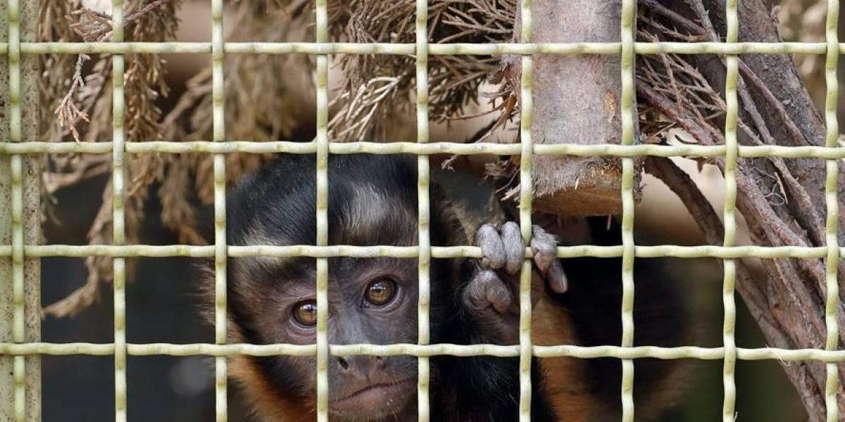 """Colombia, víctima de las millonarias """"garras"""" del tráfico ilegal de animales"""