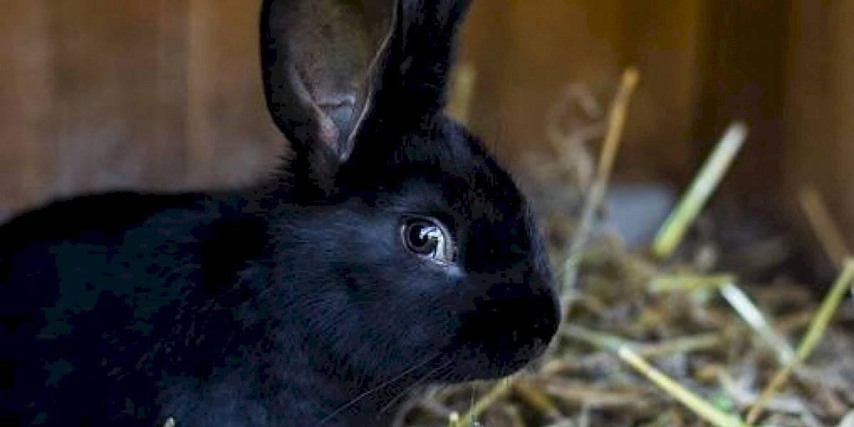 """¿Cuervo o conejo? La ilusión optica """" que vuelve locos"""" a los usuarios de internet"""