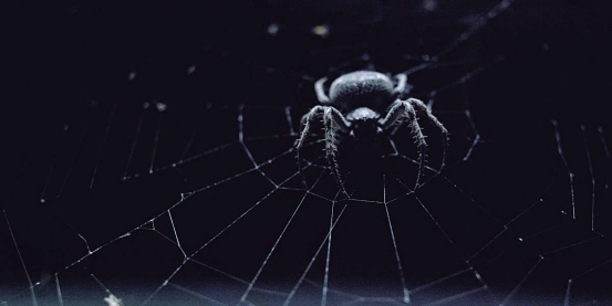 Malas noticias para los que le tienen miedo a las arañas: investigación revela que cada día se volverán más agresivas