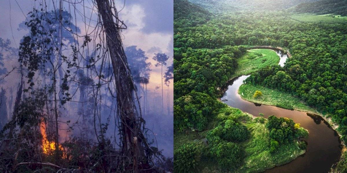 Así afectaría la destrucción de la Amazonía al mundo