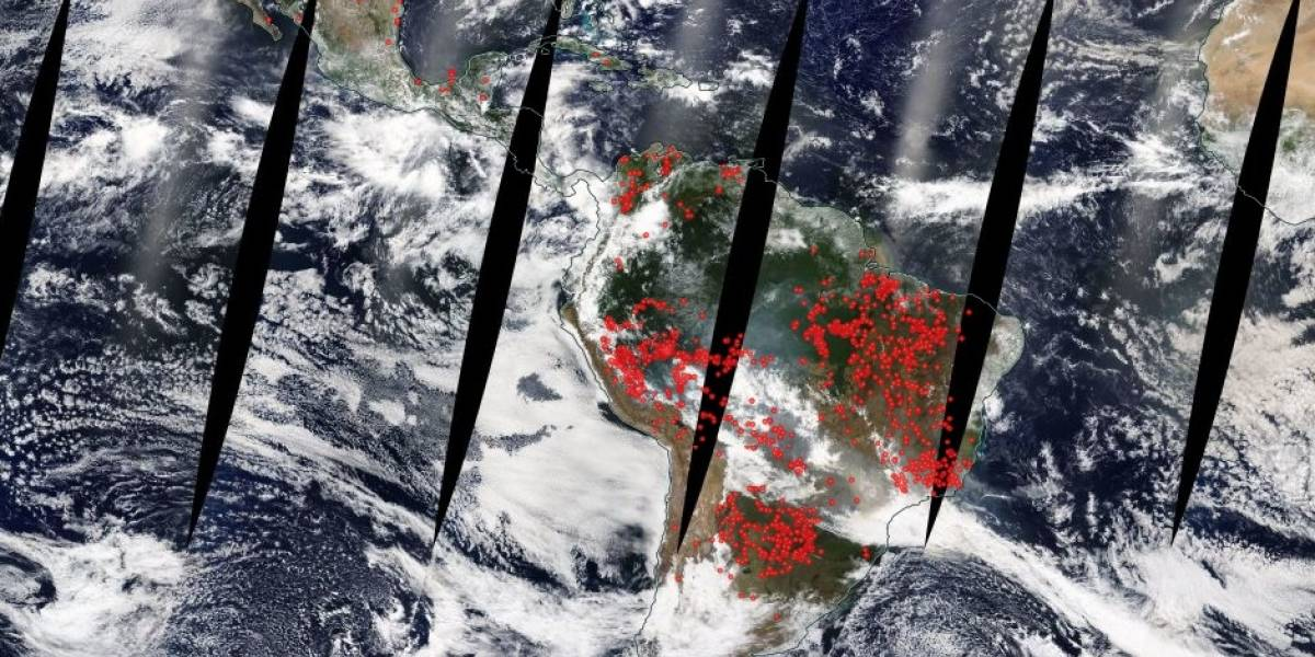 ¿Qué tan graves son los incendios forestales en el Amazonas en Brasil?