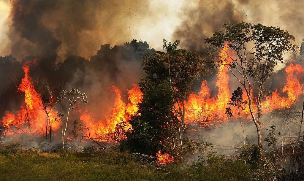 Biochar: Conoce la técnica de la agricultura que puede ayudar a reforestar el Amazonas