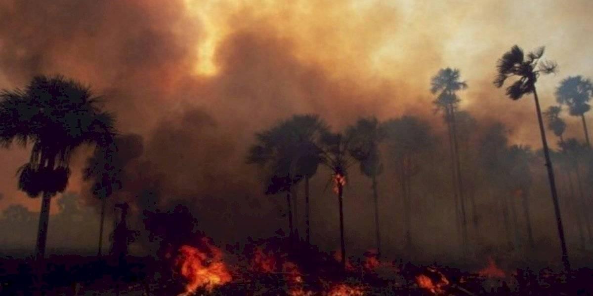 ¿Quiénes son los culpables del lamentable incendio en la Amazonía?