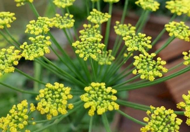 plantas medicinales para perder peso