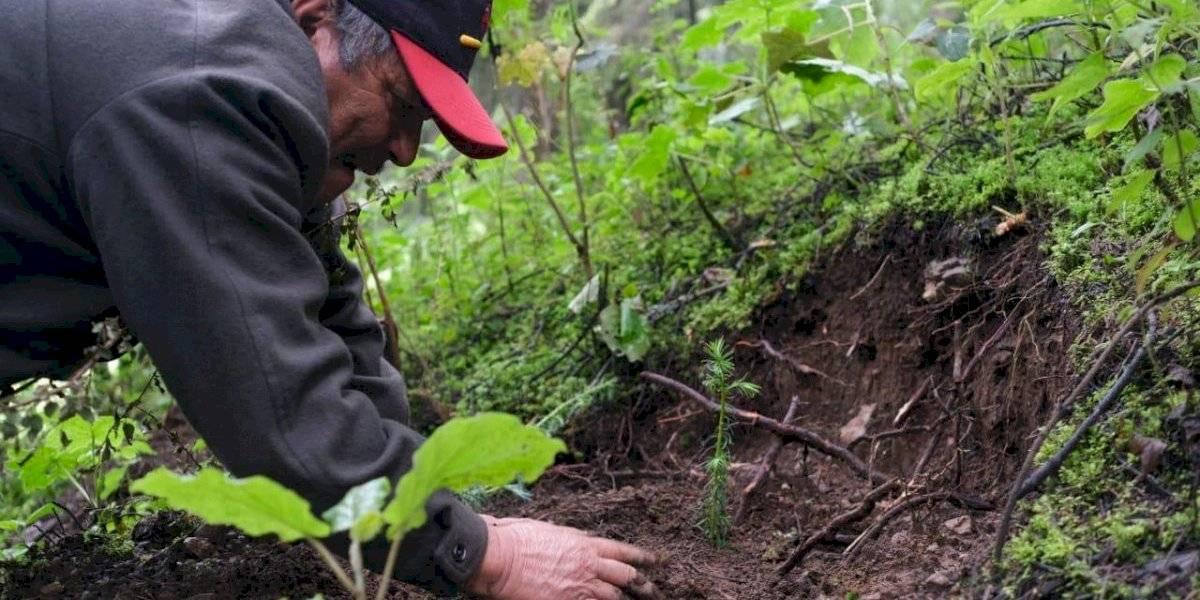 Sentencia histórica: sembrar tres mil árboles en Chiapas por ecocidio