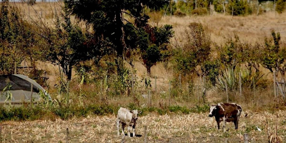 La sequía también tiene sin agua a la RM: decretan zona de emergencia agrícola en 17 comunas