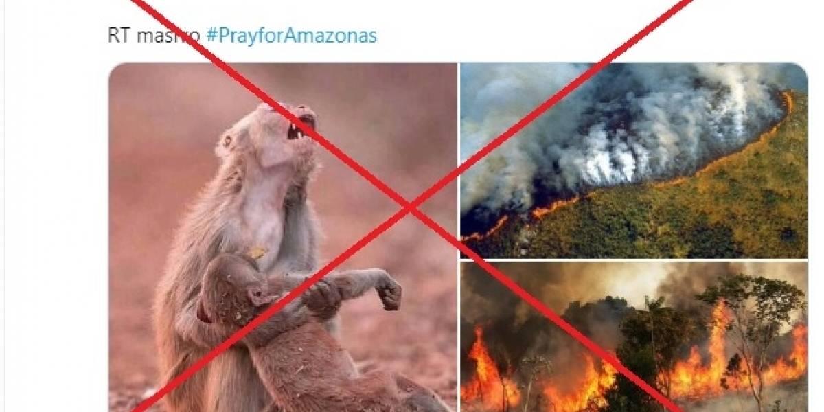 Las fotos falsas de la tragedia de los incendios en la Amazonía