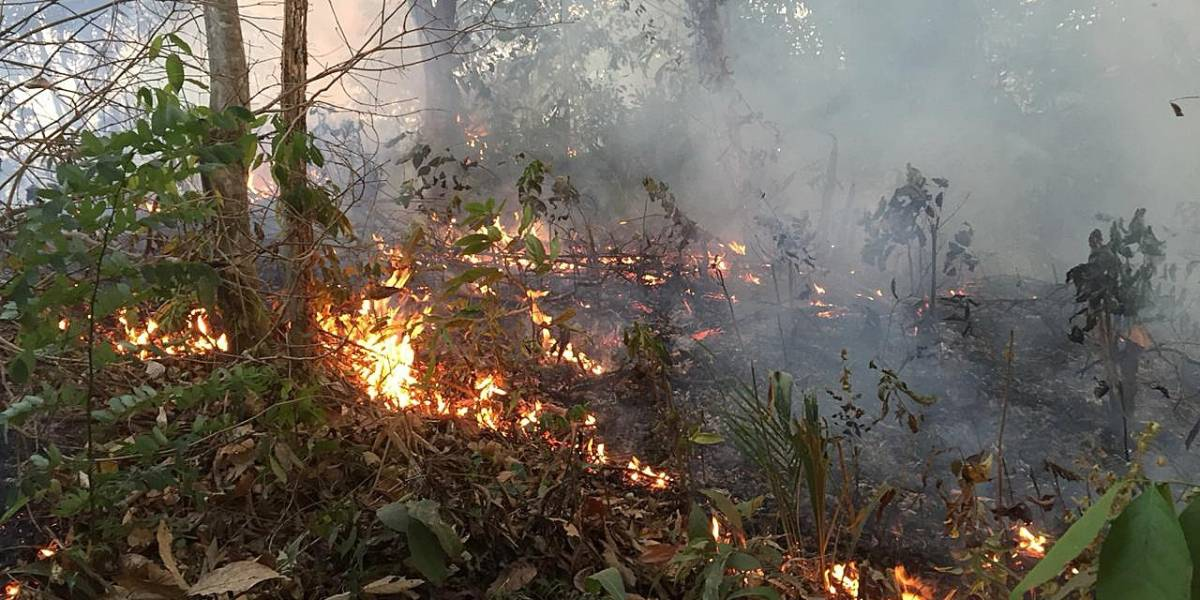 Ecuador enviará brigadas para combatir incendios en la Amazonía
