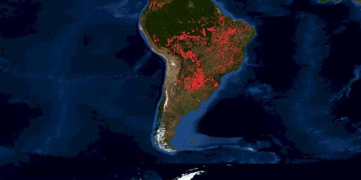 El 10% de la biodiversidad mundial y el 20% del oxígeno del planeta: lo que pierde el mundo con el devastador incendio en la Amazonía