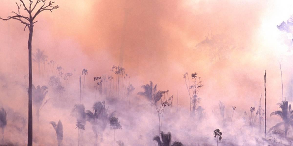 """""""Exterminador del futuro"""": el premonitorio emplazamiento contra Bolsonaro que se transformó en realidad tras devastadores incendios en la Amazonía"""