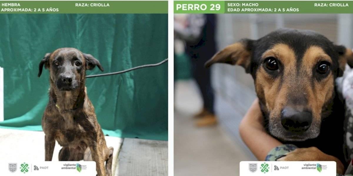 Mueren 2 de los 55 perros rescatados en un domicilio de la GAM