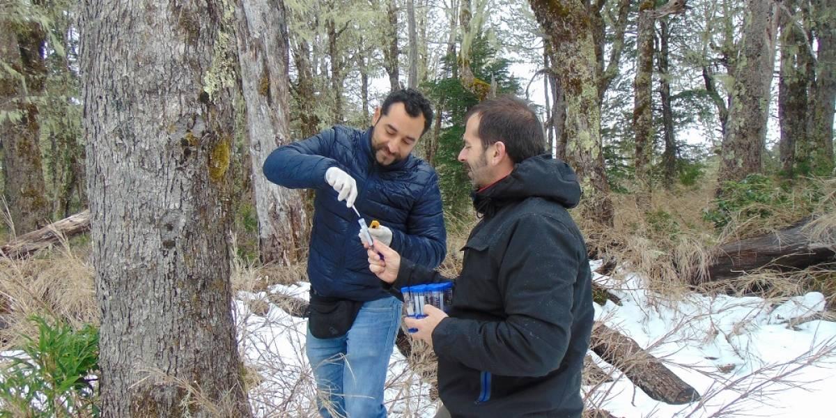 Demostraron origen en la Patagonia y buscan revolucionar la industria: el elaborado plan de científicos para que Chile consiga la denominación de origen de la cerveza lager nativa