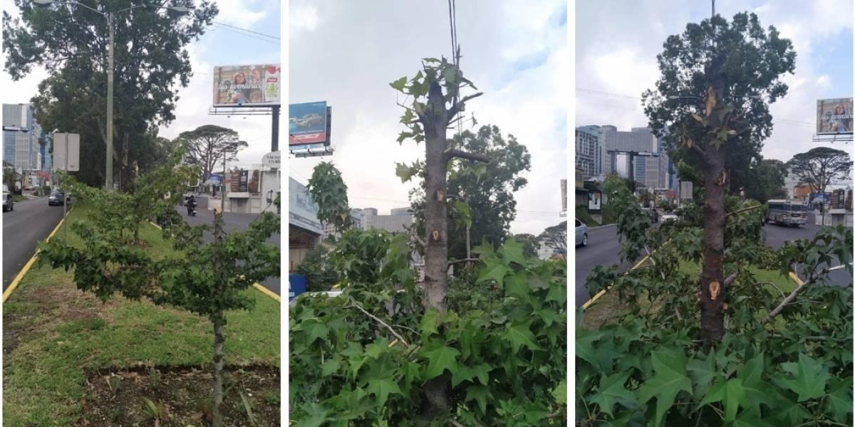 Municipalidad de Guatemala denuncia daño a árboles del bulevar Los Próceres