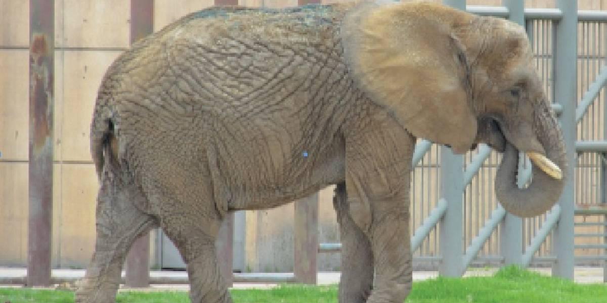 Alertan trabajadores de zoológicos 'desaparición' de medicinas