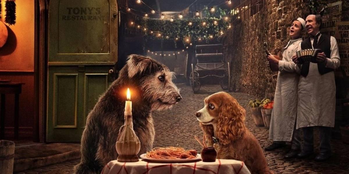 La historia de Monte, el perro protagonista de la nueva versión de 'La Dama y el Vagabundo'