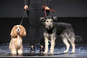 Perros de la película La Dama y el Vagabundo