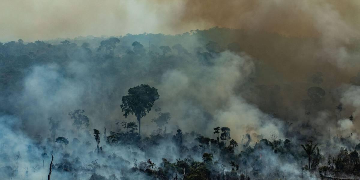 División y sin acciones concretas: así fue la cumbre entre siete países sudamericanos para proteger el Amazonas
