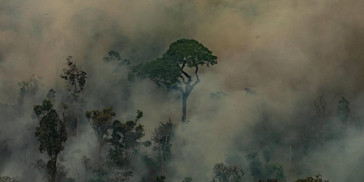 El Amazonas está agonizando: G7 y comunidad internacional comienzan a actuar para salvar el pulmón verde del planeta