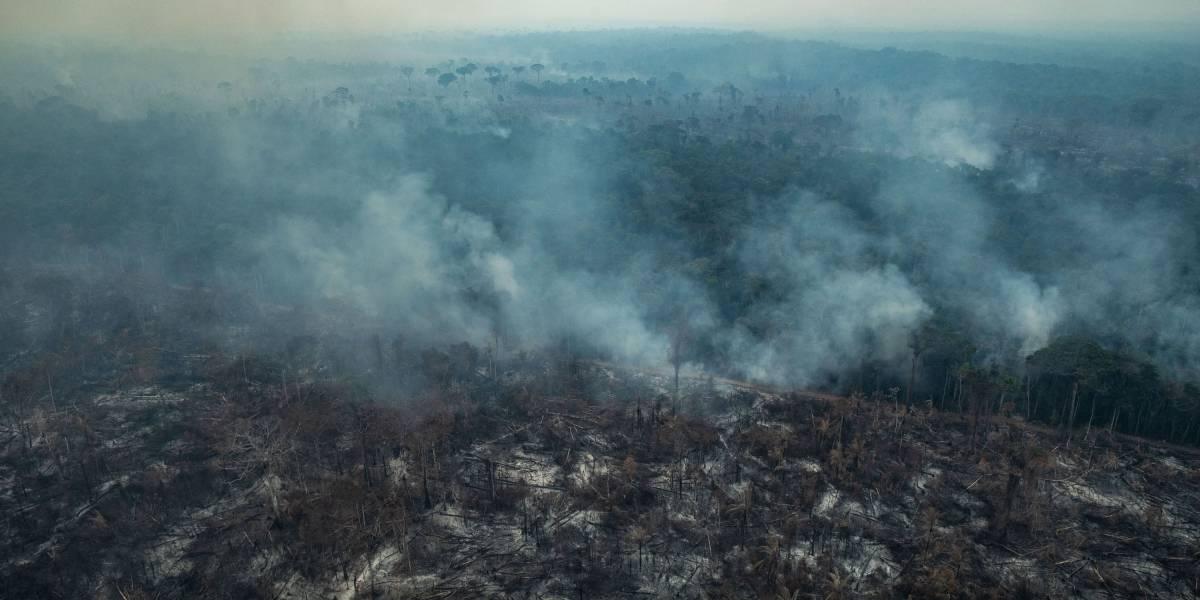"""""""Crimen ambiental"""": las dramáticas imágenes de la destrucción que provocan los incendios en el Amazonas de Brasil"""