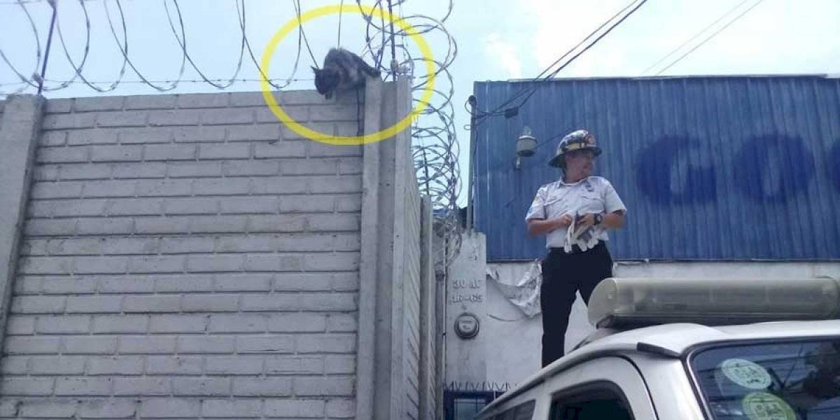 VIDEO. Bomberos rescatan a gata atrapada en alambre de púas y que acababa de parir