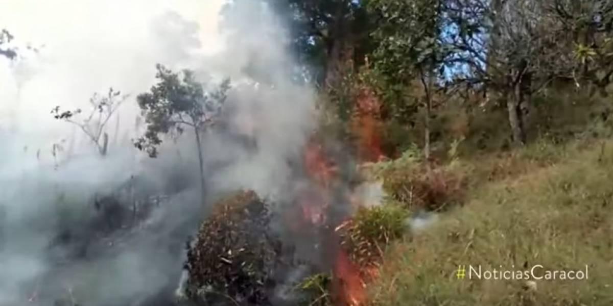 ¡Preocupate! La triste cifra de incendios de bosques colombianos en lo corrido del año