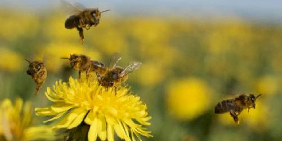 ¡Insólito! Enjambre de abejas se instaló en el trasero de un joven