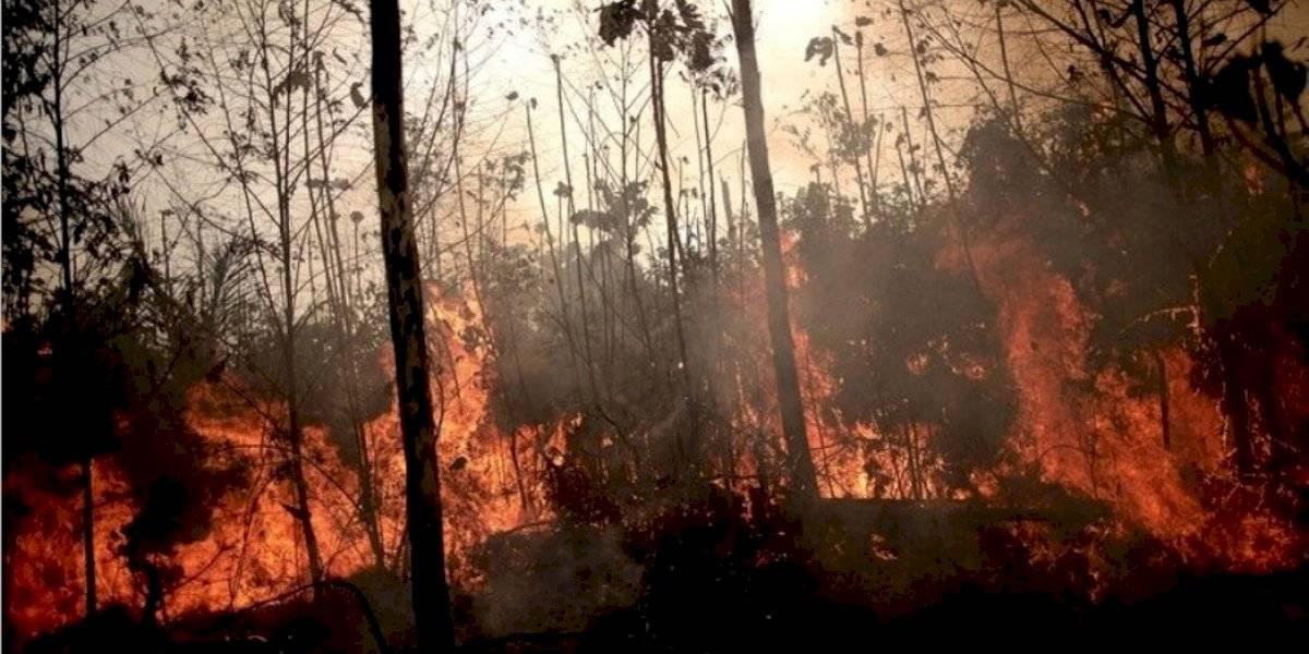 Alerta científica: Esto pasaría con las zonas afectadas por el incendio en la Amazonía