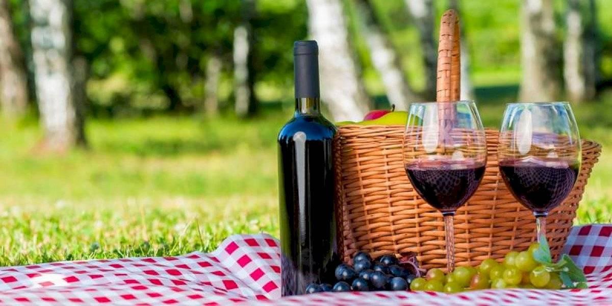 Casa vinícola apuesta por la tecnología para mejorar sus productos