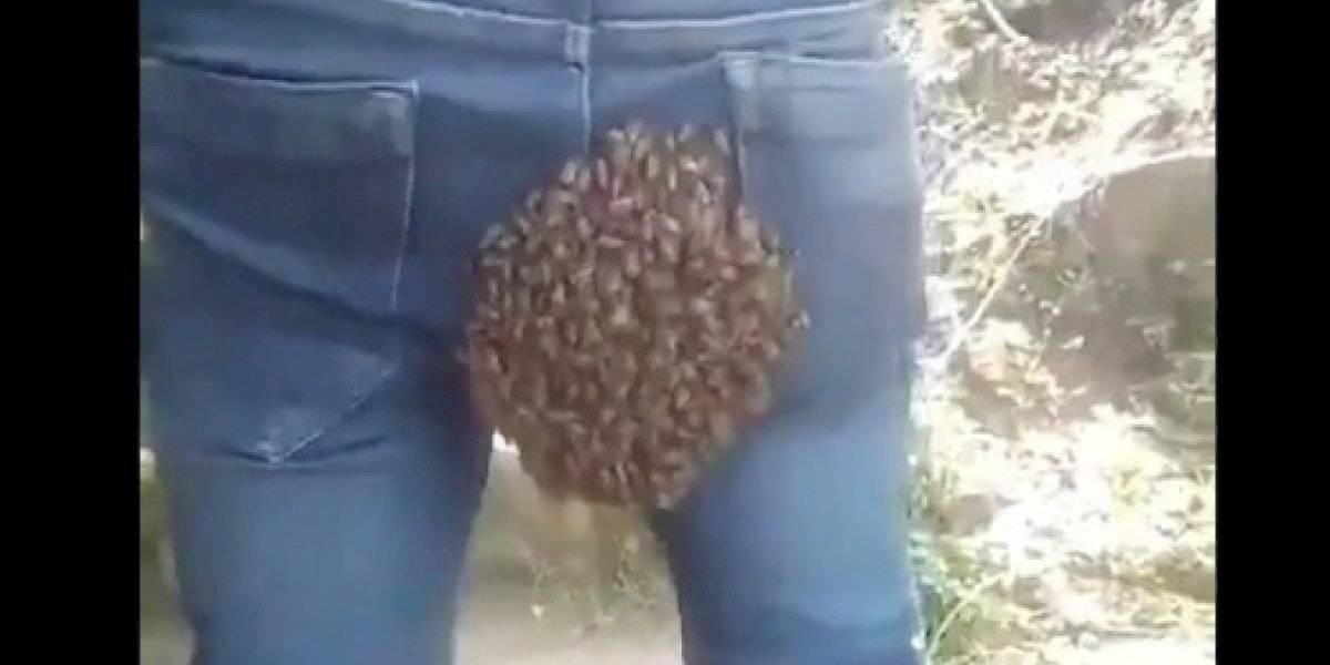 Una hilarante pesadilla: enjambre de abejas eligió el trasero de un joven para instalar su colmena