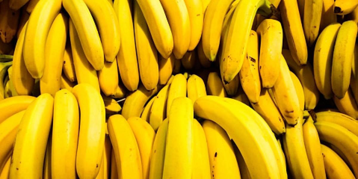 ¿El mundo se está quedando sin plátanos? Hongo que asesina a las bananas llega a Sudamérica y crece el temor ante el futuro de la fruta
