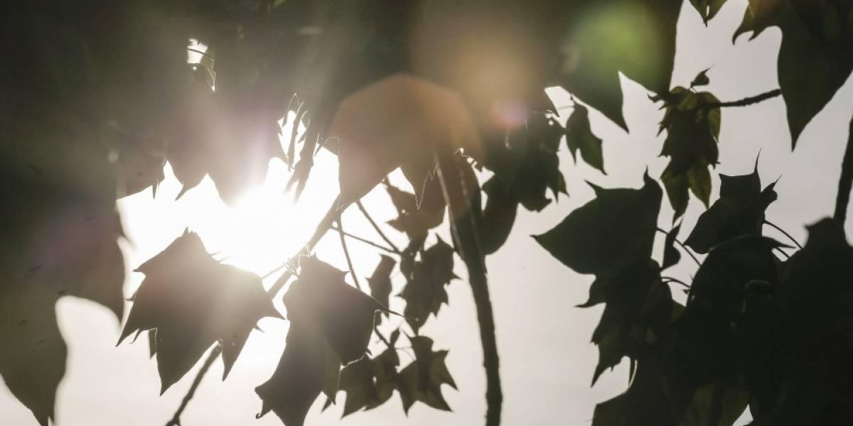 Ola de calor: ¿Se terminarán las estaciones intermedias?