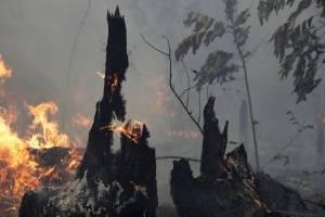 Incendios en el Amazonas no dan tregua