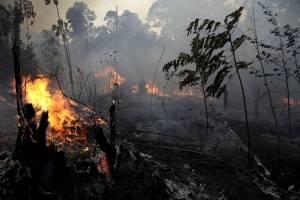 Incendios en la Amazonas, en Brasil