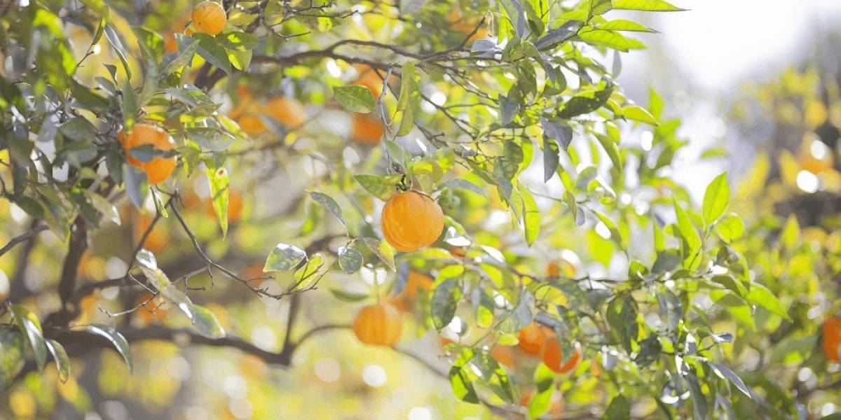 Primavera e o florescimento pela Aromaterapia