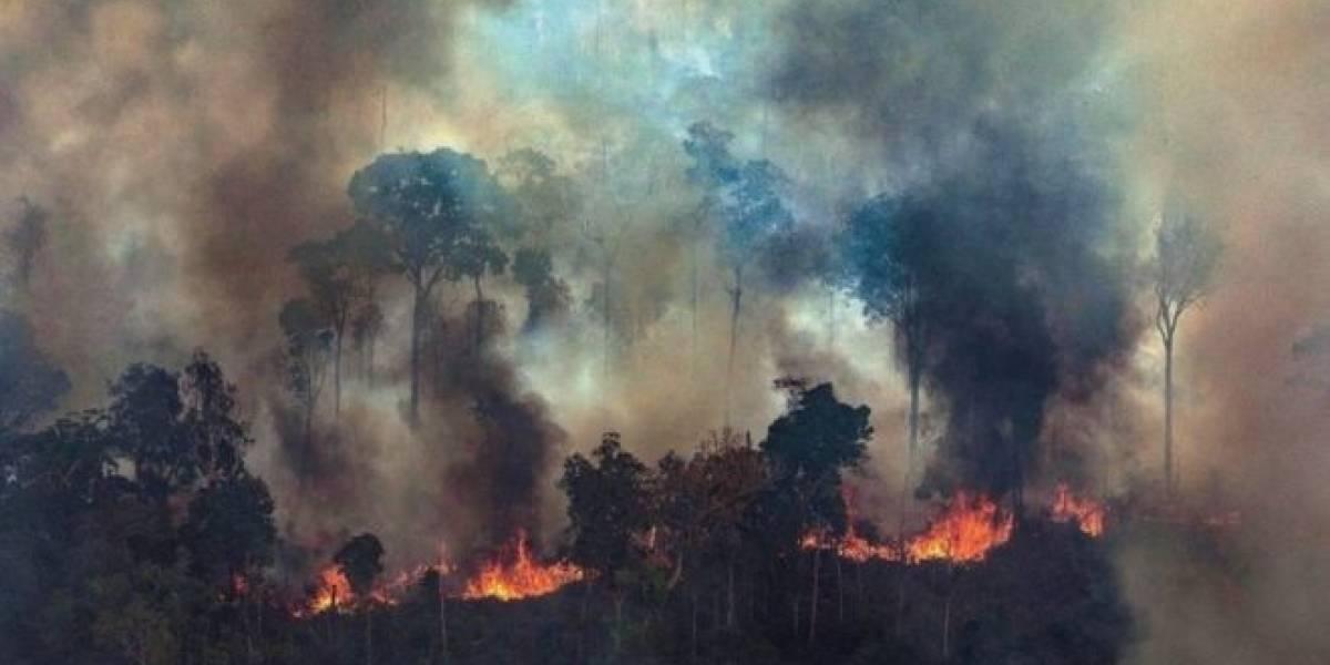 Amazonas: Tim Cook es el primer CEO en hablar sobre el incendio