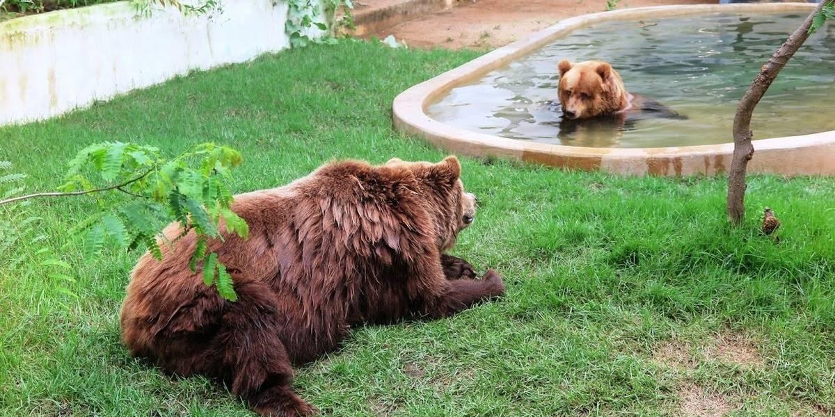 Ursos resgatados de circo são transferidos para rancho no interior paulista