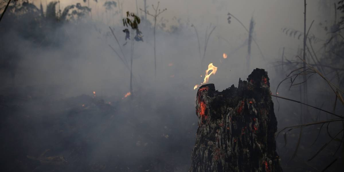 A semanas del inicio de los incendios en el Amazonas: Bolsonaro recién prohíbe quemas en la selva tropical de Brasil durante 60 días