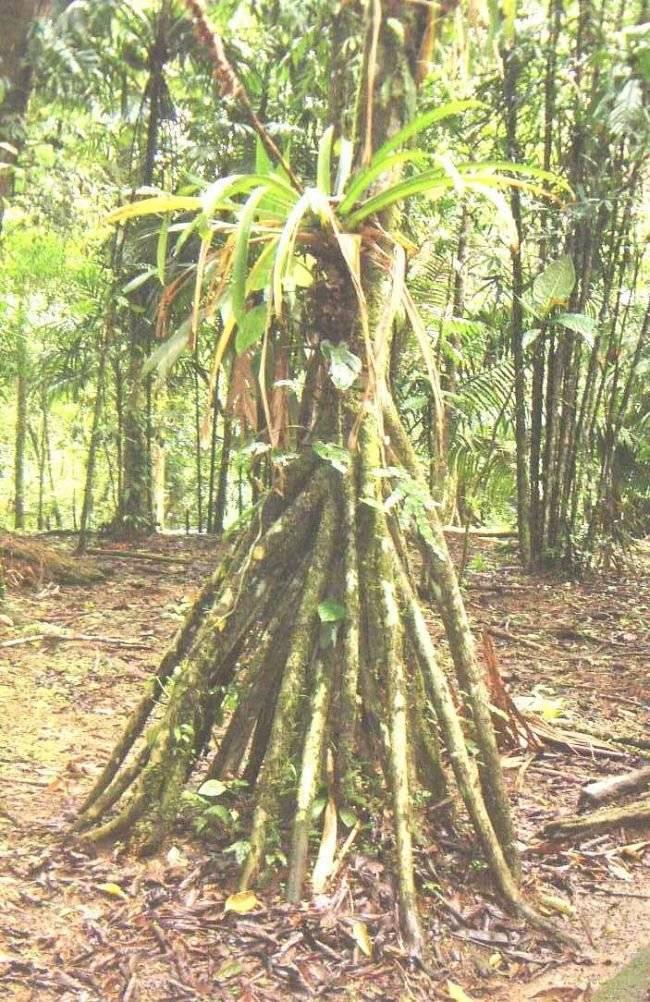 Ciencia árboles caminan