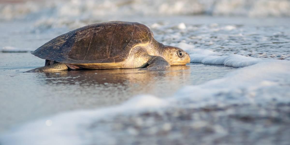 Puerto Vallarta, listo para recibir a las tortugas